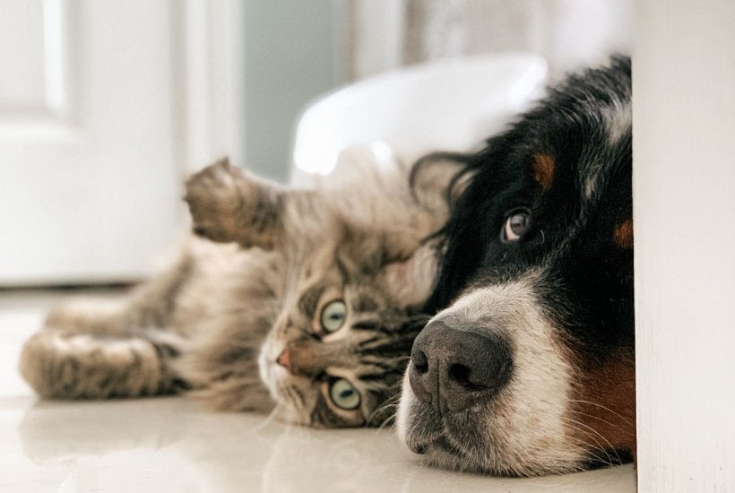 Dog and cat lying on floor together | Veterinary clinic in Manassas, VA
