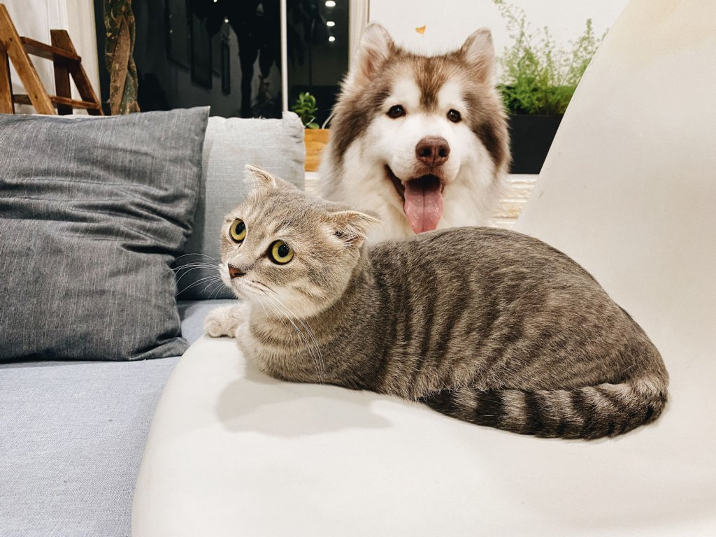 Dog and cat | Buy pet food online!